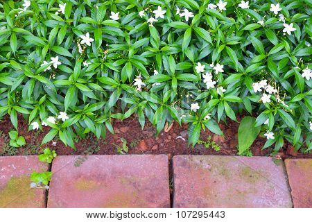 White flowers in flowerbed with border of red bricks