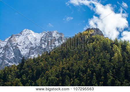 Mountain Peak And Pine Forest, Yading National Level Reserve, Daocheng, Sichuan Province, China.