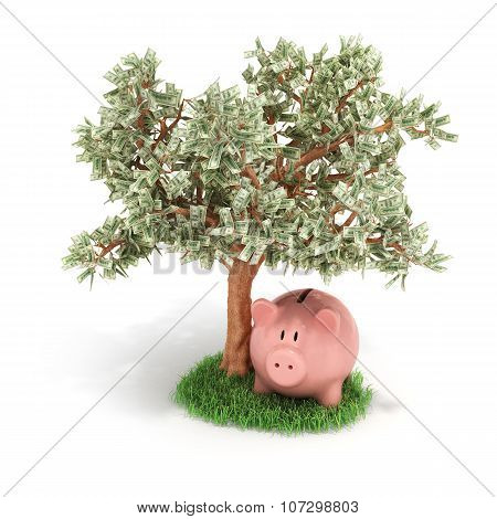 Money Tree And Piggy Bank, Isolated On White Background