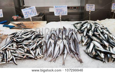 Fish Stand 2