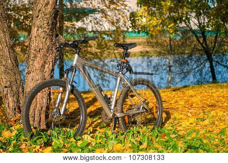 Bicycle Is Parked Near The Tree In Autumn Park On A Sunny Day