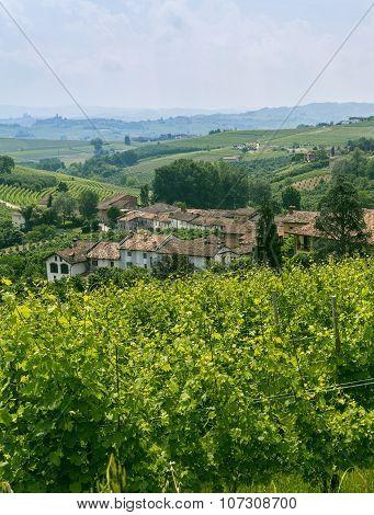 Langhe (piedmont, Italy)