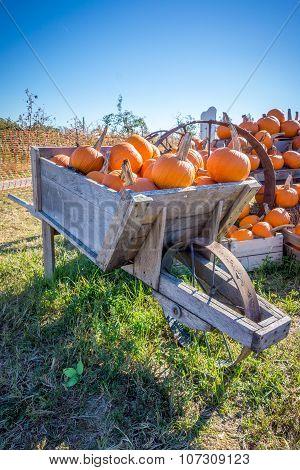 Pumpkins in an old wheel barrow