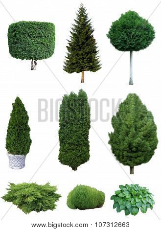 Set Of Trees And Shrubs.