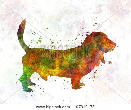 Basset Hound 01 In Watercolor