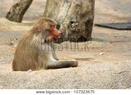 The Portrait Of A Single Monkey