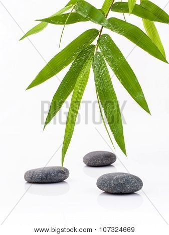 The Stones Spa Treatment Scene And Bamboo Leaves With Raindrop Zen Like Concepts.