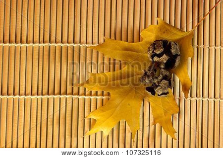 pine cones with yellow leaves on bamboo background