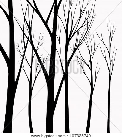 Group of silhouettes trees