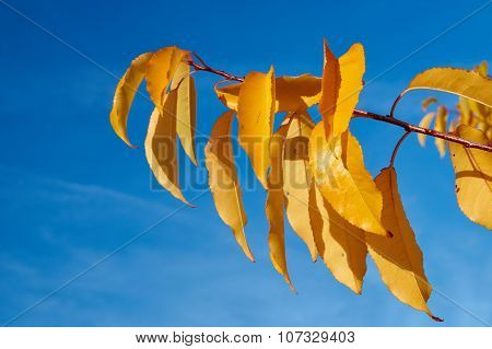 Colorful autumn leaves against the sky