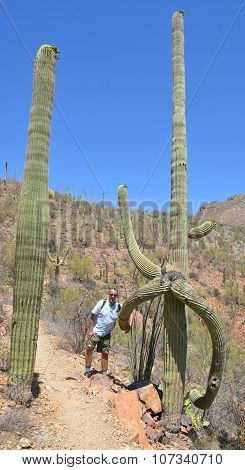 Man nearby saguaro