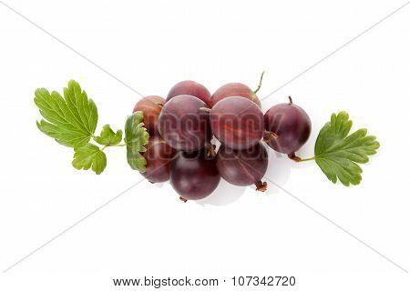 Red Gooseberries.