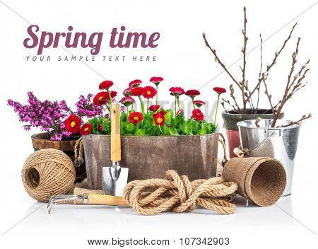Spring still life daisies in wooden basket garden tools. Isolated on white background