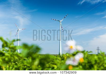 Wind generators in the green field at sunny day