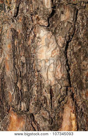 Pine tree bark texture. Natural textured brown background.