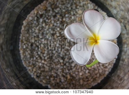 Beautiful white flower plumeria floated on water and pebble in widemouthed glass jar