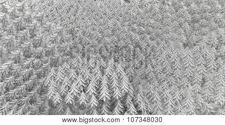 Fir Forest Background White