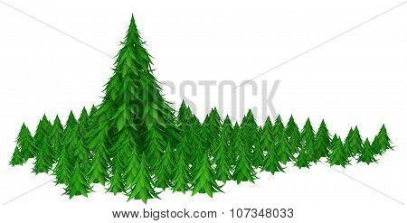Fir Forest, Big Tree