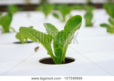 Hydroponics Method Of Growing Plants Using Mineral Nutrient Solutions