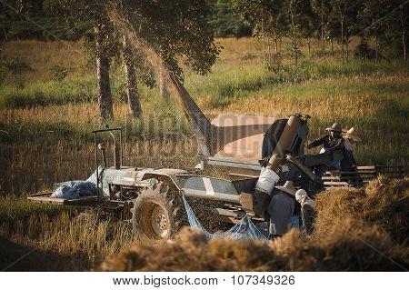Farmer harvest