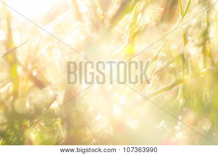 Background In Bright Tones Of Grass