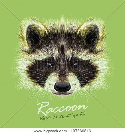Vector Illustrated Portrait Of Raccoon On Green Background