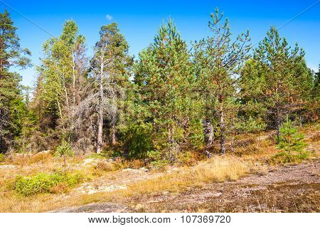 Wild Natural Landscape, Forest Edge In Karelia
