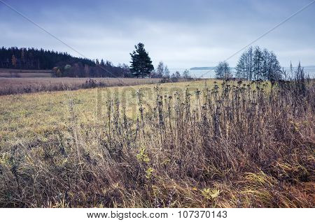 Dry Grass On The Edge Of The Field In Finland