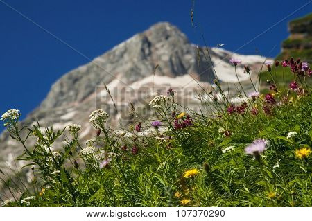 alpine grass on a background of mountain