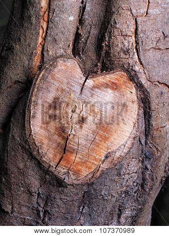 Heart shaped tree branch cutoff in natural color