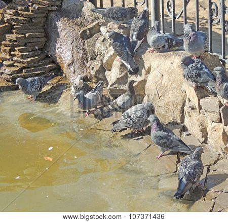 The Pond With Rock Doves