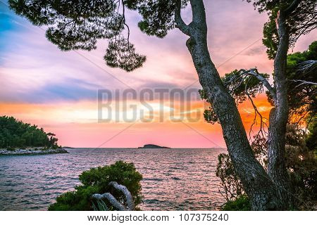 Pine Trees Leaning Towards The Sea In Front Of Sunset