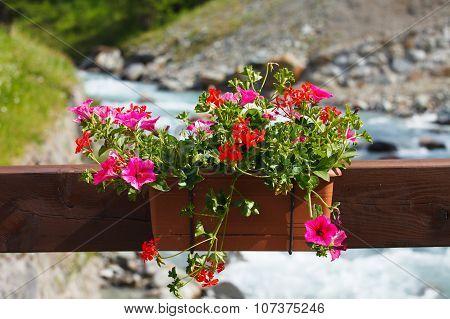 Petunia flowerpot on the river bridge near mountain river, Alps