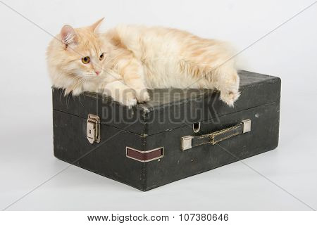Cat Resting On An Old Suitcase With A Gramophone On A White Background