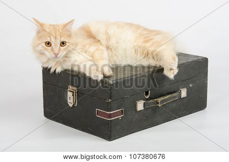 The Cat Is Lying On An Old Suitcase With A Gramophone On A White Background