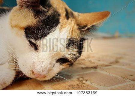Cat Sleeps On Cement At The Park