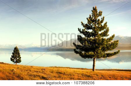 Lake Matheson Mt Cook New Zealand Tranquil Nature Concept