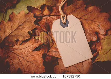 Price Tag From With Twine On Dry Autumn Leaves Background