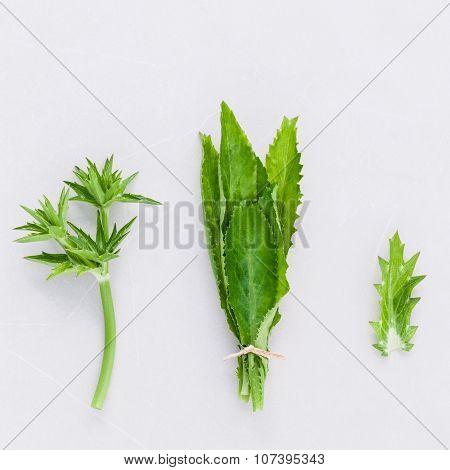 Culantro, Long Coriander, Sawtooth Coriander The Herbs For Seasoning Of Thailand, India, Vietnam And
