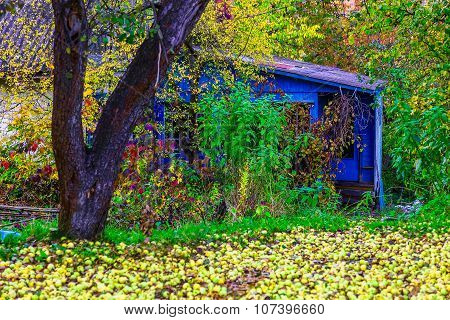 Country Home In Colorful Bushes In Autumn