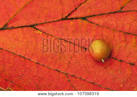 Berry Orange Leaf