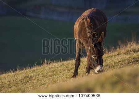 Grazing Donkey On Field