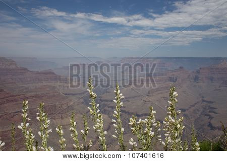 Gran Canyon with flowers
