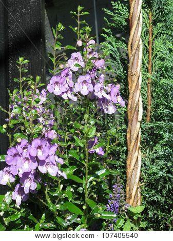 Purple flowers in rattan basket