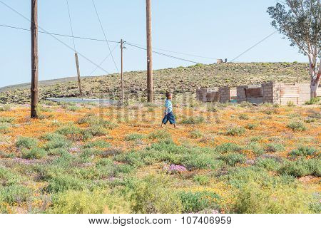 Young Child Walking Through Flowers In Stofkraal