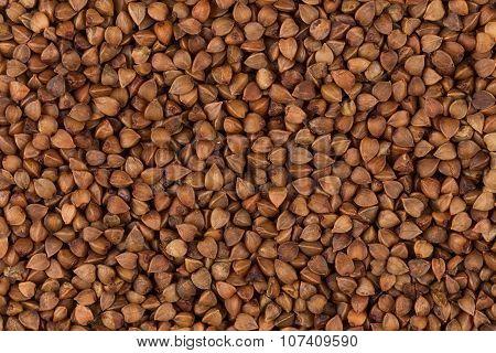 Buckwheat Texture