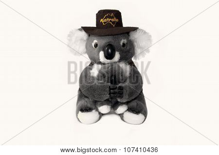 Australian koala bear toy isolated on white background