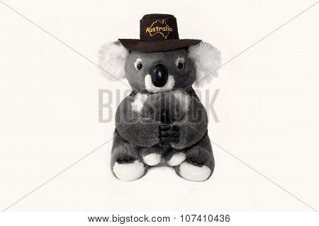 Australian koala bear toy isolated on white background