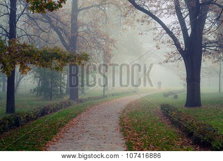 Man Walking In Park On Beautiful Misty Autumn Morning