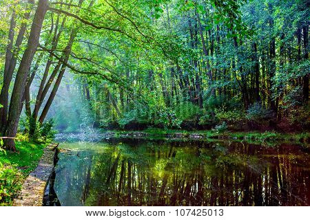 Beautiful forest lake with sun rays